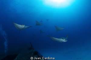 wreck Anaya &amp; Eagle Rays by Juan Cardona 